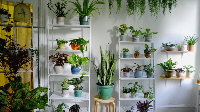 Προτάσεις φυτικής διακόσμησης
