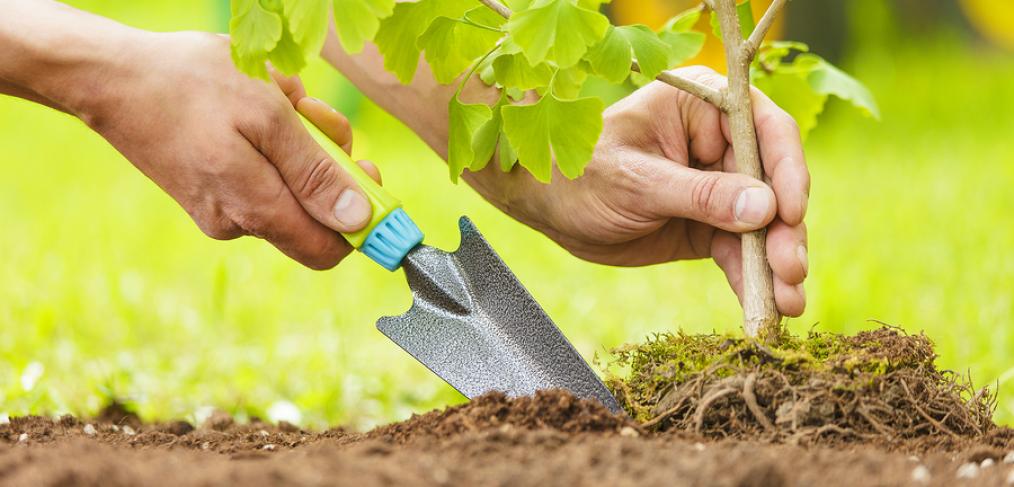 Φύτευση ή απομάκρυνση φυτικού υλικού