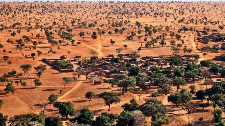 Η τεχνητή νοημοσύνη ανακαλύπτει εκατοντάδες εκατομμύρια δέντρα στη Σαχάρα